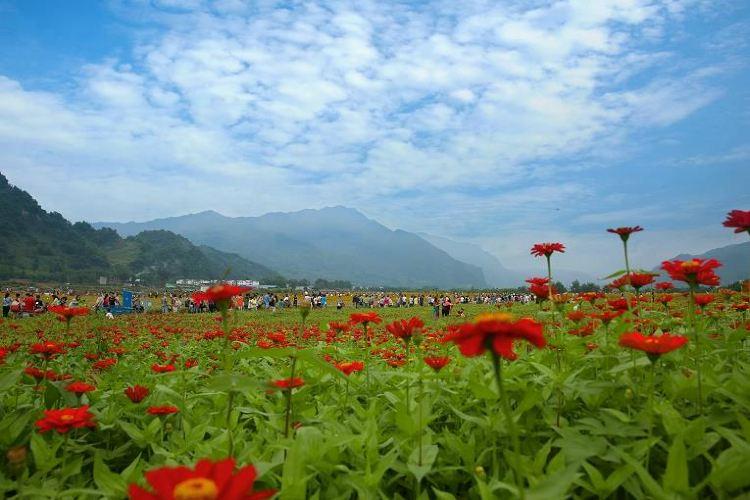 Tongji Flower Sea