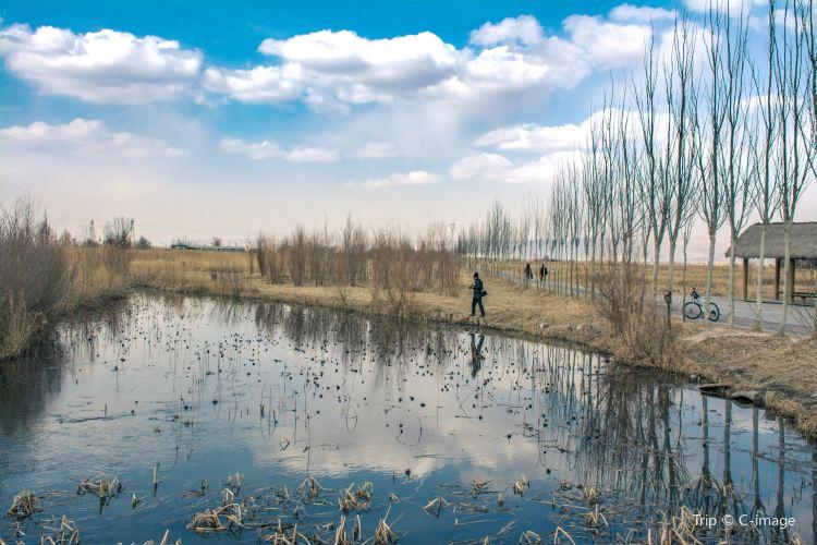 Zhangye National Wetland Park1