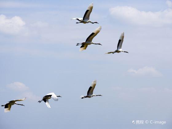 扎龍自然保護區