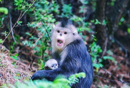 Yunnan Golden Monkey National Park