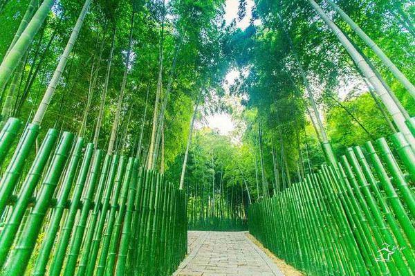 Shushan Ecological Village4