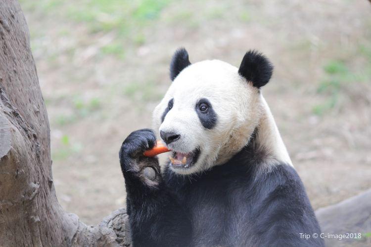 Shenzhen Safari Park2