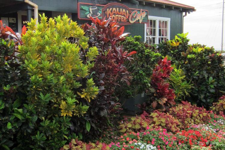 Kauai Coffee Company3