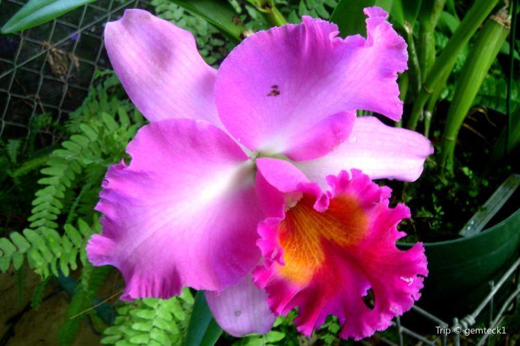 Flower Forest4