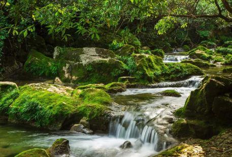 茂蘭喀斯特森林保護區