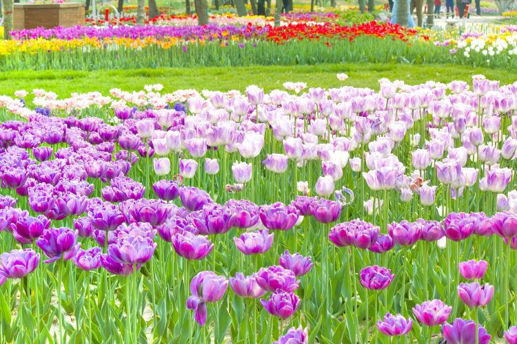 스자좡 식물원