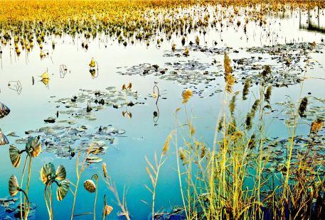 運河濕地公園