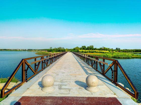 Tianjin Shell Dikes