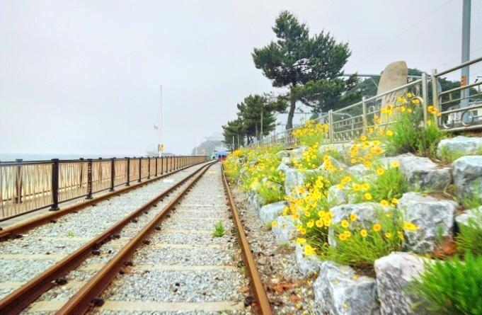 Ocean Rail Bike