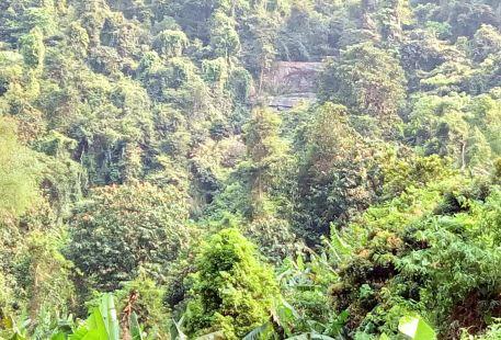 派陽山森林公園