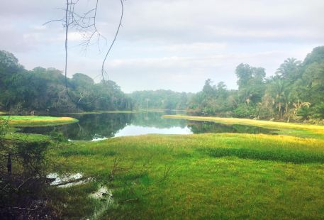 Panama Rainforest Discovery Center
