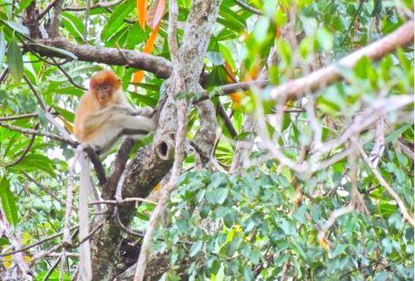 凱爾斯紅樹林保護區