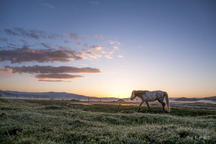 紅原—若爾蓋大草原1