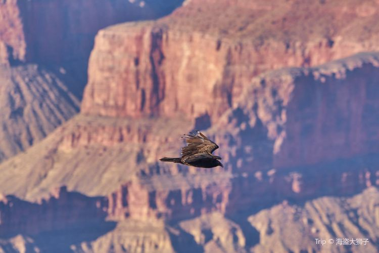 Grand Canyon National Park4