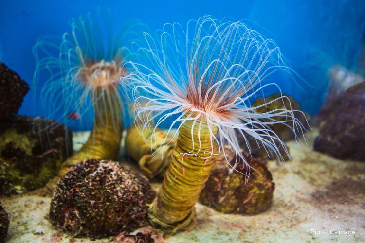 National Oceanographic Museum of Vietnam - Nha Trang1