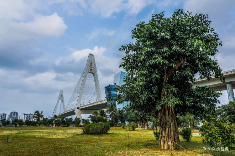 Haikou Century Bridge3