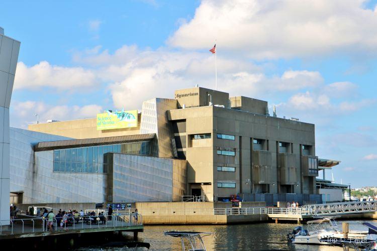 新英格蘭水族館1