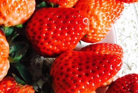 Zhejiang Strawberry farm (yajulehuayuan)