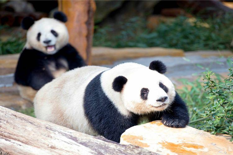 옌청 야생동물원