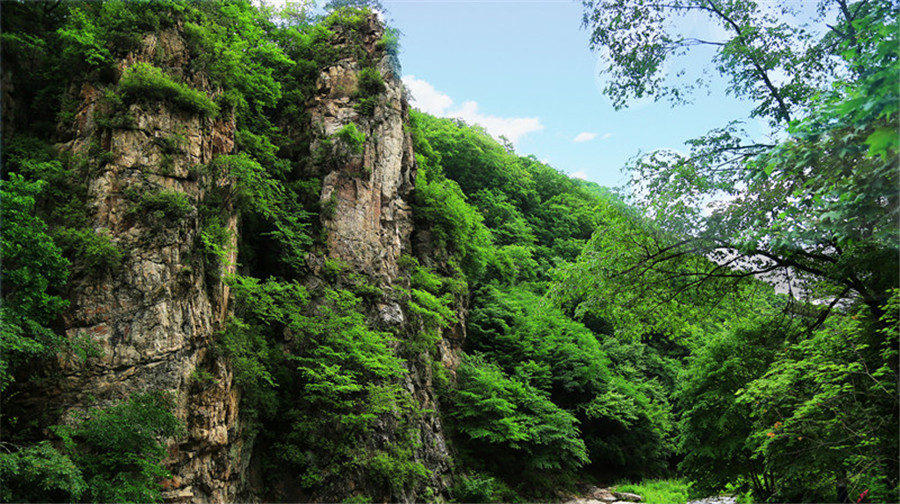 Yulongxi Primeval Forest Park