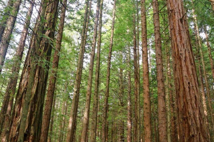 紅木森林公園4