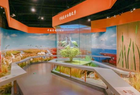Yellow River Delta Bird Museum