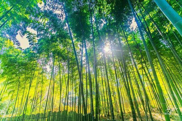 Shushan Ecological Village
