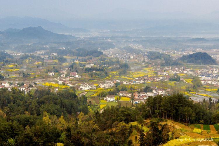 Hanzhong Canola Fields1
