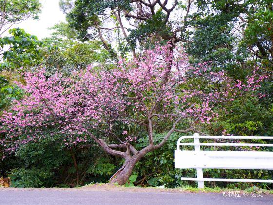 야에타케 사쿠라노모리 공원