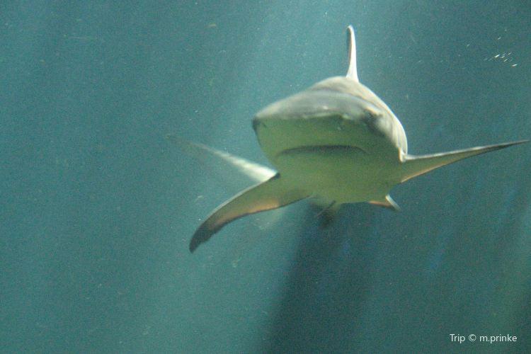 斯德哥爾摩水族館2