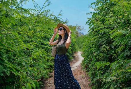 Shangrao Botanical Garden