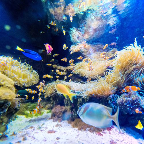 Kelly Tarlton's Antarctic Encounter & Underwater World