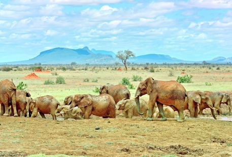 Tsavo National Park