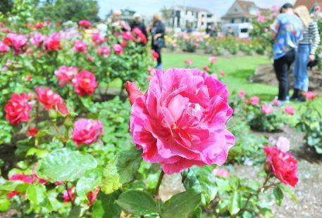 帕內爾玫瑰花園