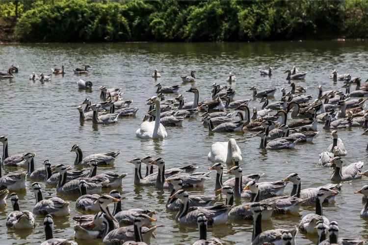 雙龍湖觀鳥園4