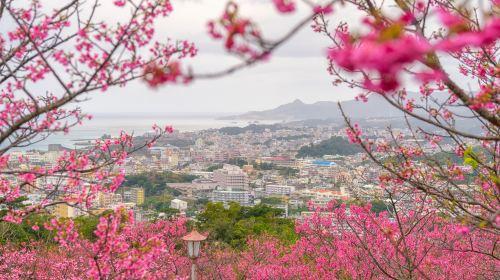 八重岳桜の森公園