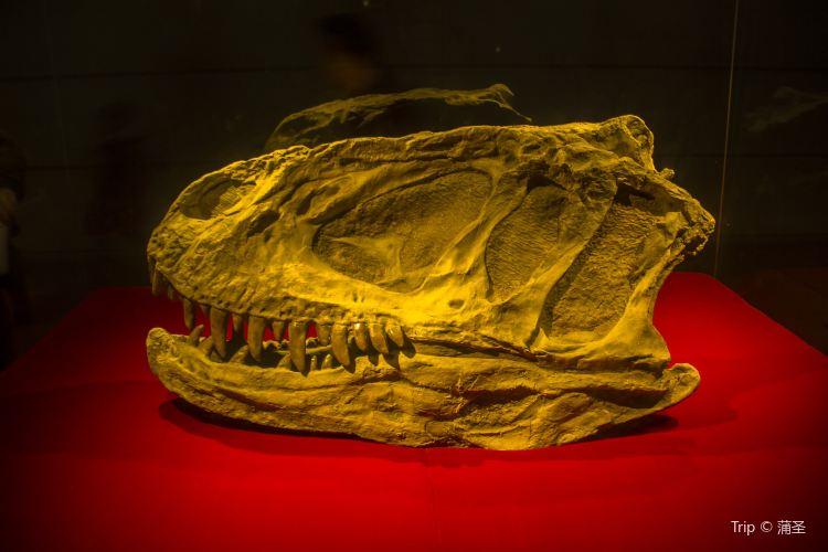 쯔궁 공룡 박물관3