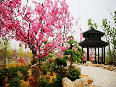 The Royal Garden of Stone Flower