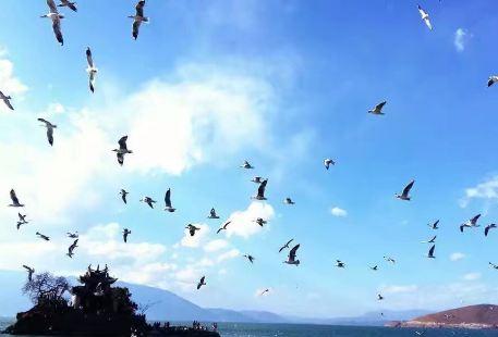 候鳥保護區