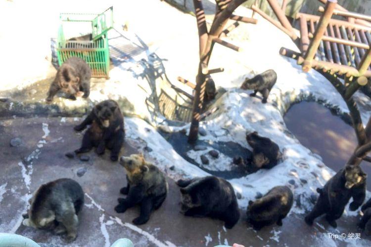 Noboribetsu Bear Park1