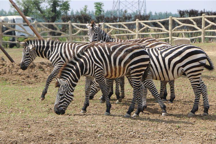 宿州野生動物園2