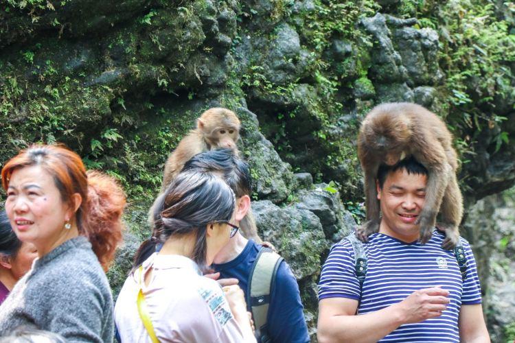 어메이산(아미산) 자연 생태 원숭이 보호구역4