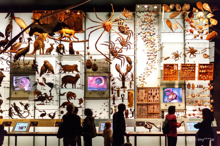 American Museum of Natural History2