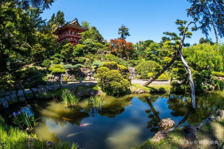 日本茶園4