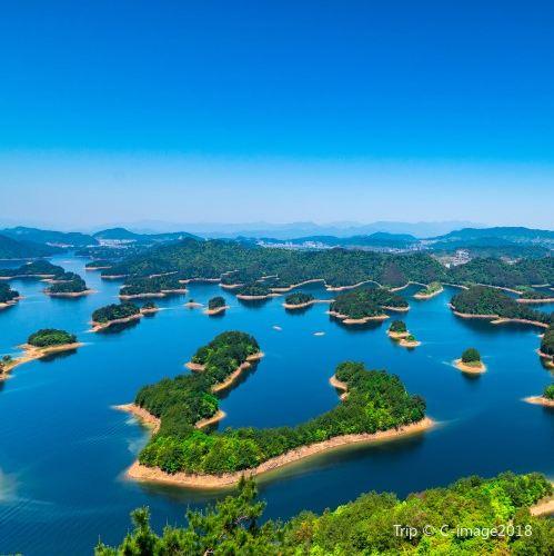 Osmanthus Island1