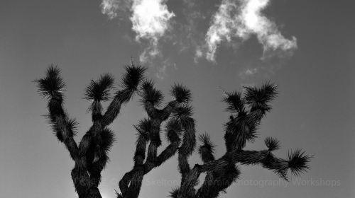 High Desert Test Sites