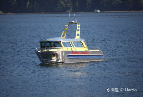 Remote Passages Marine Excursions