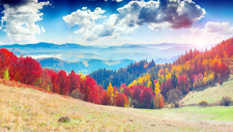 烏克蘭喀爾巴阡山脈原始毛櫸森林