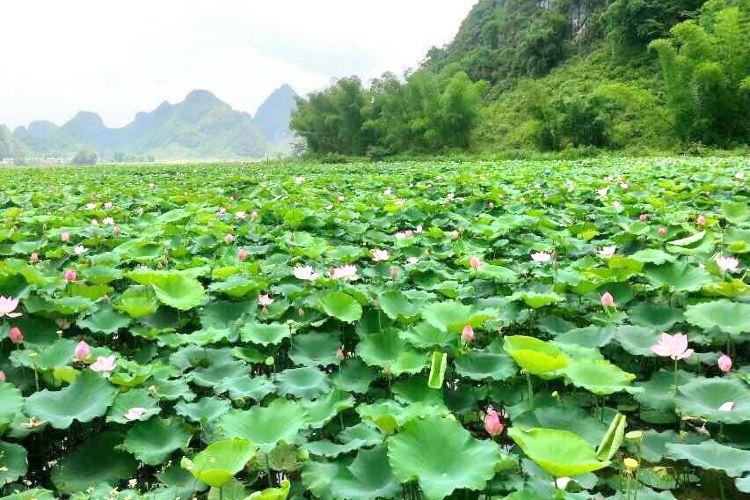 Bujinghu Lotus World