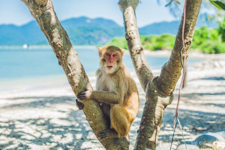 Monkey Island1